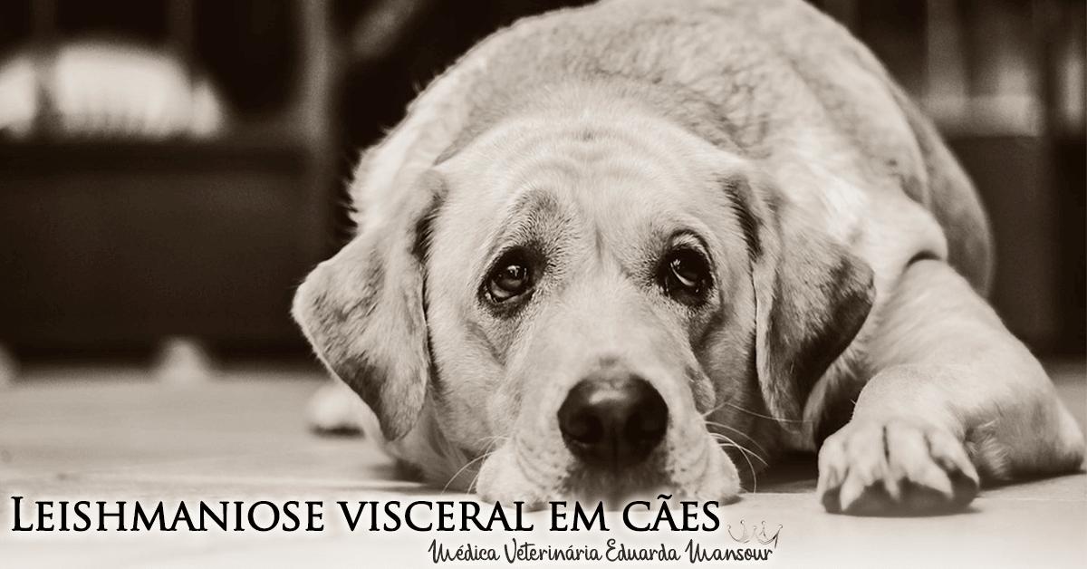Leishmaniose visceral em cães