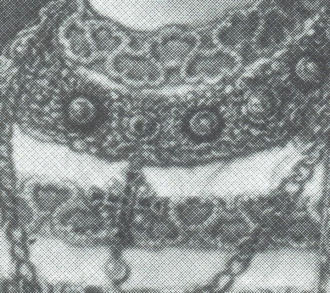 1539 nrw bbda anne bernel halsband