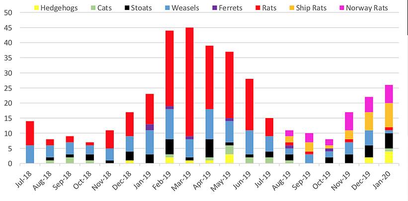 Predators caught per month, July 2018 to January 2020