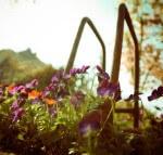 gardening tips woodbridge nj