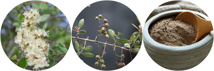 """Propiedades y beneficios de la Henna, """"Lawsonia inermis"""""""