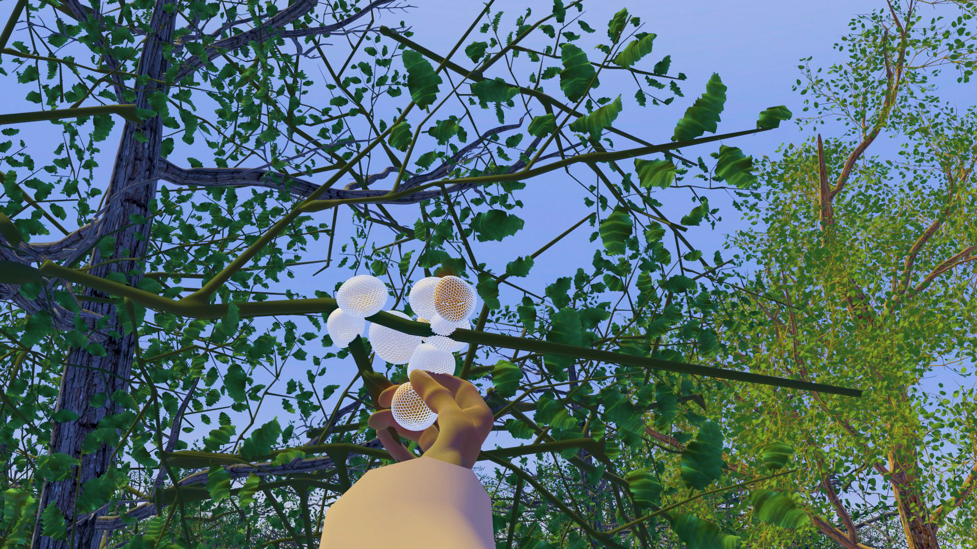 Screenshot form Mapu Kufüll showing a POV shot looking up through the trees, with arm reaching out to pick small white mushrooms