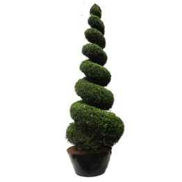 Cupressocyparis-castlewella,topiaire,spirale