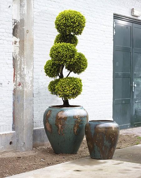 Vente de plantes taillées, murs végétaux et décorations végétales