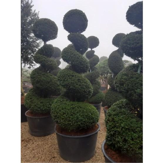 Topiaire-taxus-spirale-boule