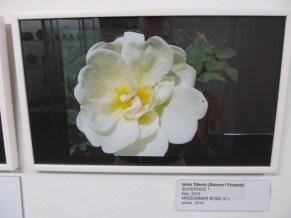 28. Art Senses näitus Pärnus