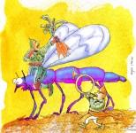 9 zanzara