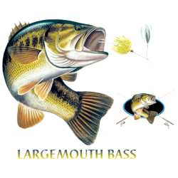 LARGEMOUTH BASS COMBINATION W/CREST