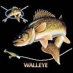 WALLEYE COMBINATION W/CREST
