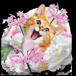 SELFIE CAT 1