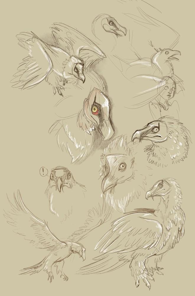Lammer-doodles.
