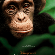 "DisneyNature's Chimpanzee – ""See Chimps, Save Chimps"""