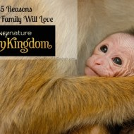 Top 5 Reasons You Will Love Disneynature's Monkey Kingdom
