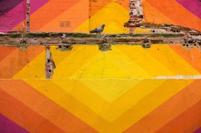 Palomas y paredes (3)