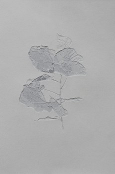 TENTOLINI Giorgio, Giovani Foglie - 2015, carta bianca incisa a mano, cm 28,5x19