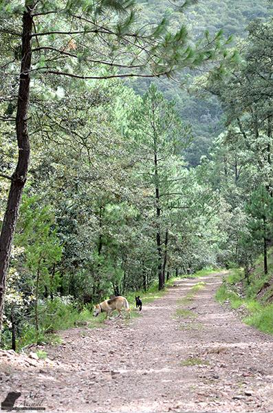 Potochis bosque