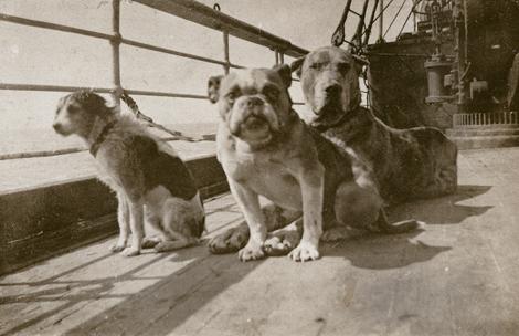 Perros del Titanic