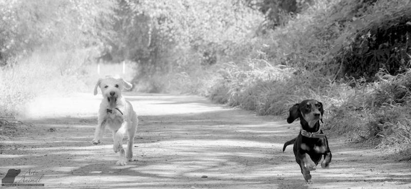 duo con personalidad - Arte Animal