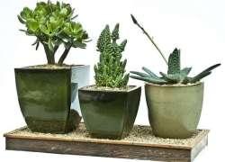 Plantas suculentas2