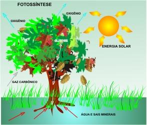 AC-Fotossíntese