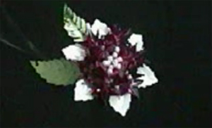 Flor con diseño de estrella