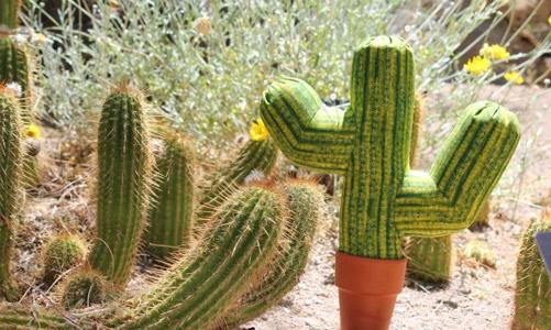 cactus en su ambiente