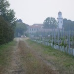 Dall'Acqua (Copia)
