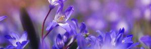 cropped-flower-1331744_1280.jpg