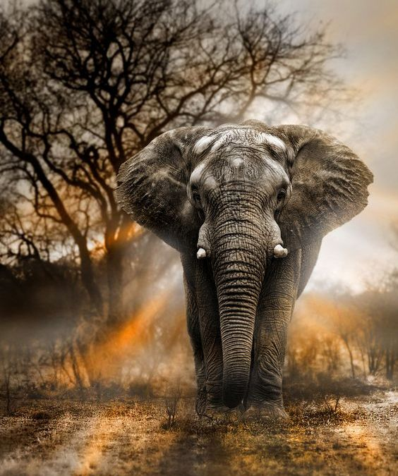 Elephant herpesvirus: killing up to 90% of severely  affected animals