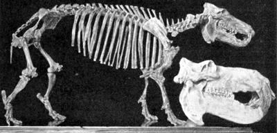 vergleich größen madagassisches flusspferd und großflusspferd