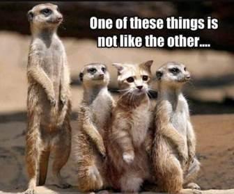 Digital natives are not like other media - cat hiding among meerkats