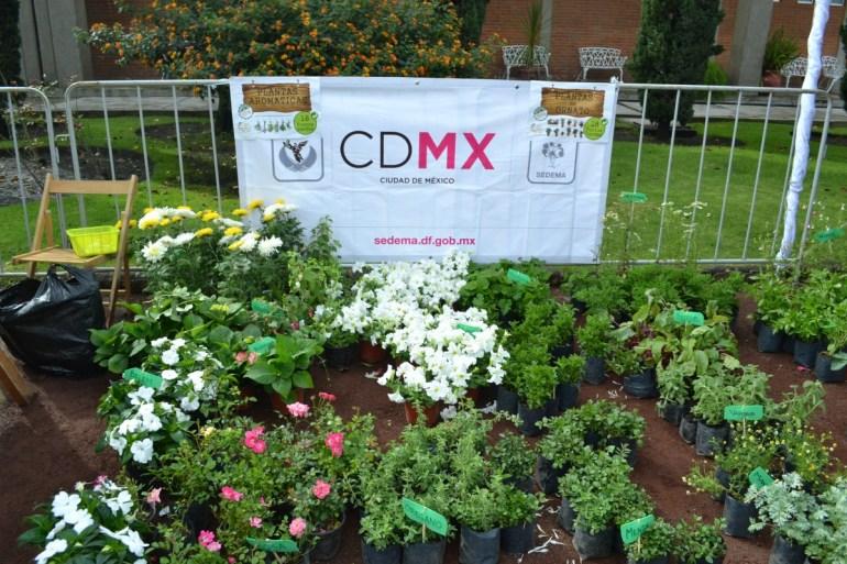 Cada mes podrás cambiar tu basura inorgánica por vegetales y dulces orgánicos, en el Mercado de Trueque CDMX.