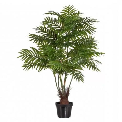 30335879 palmier areca H110