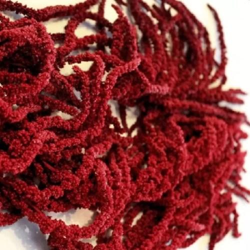 Amaranthus conservat Rosu burgund detaliu