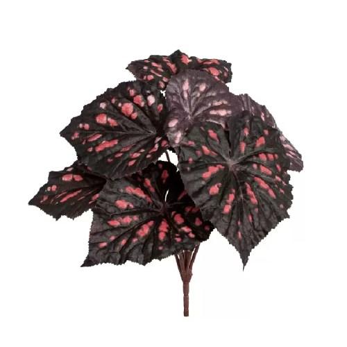 Begonia tufa artificialal
