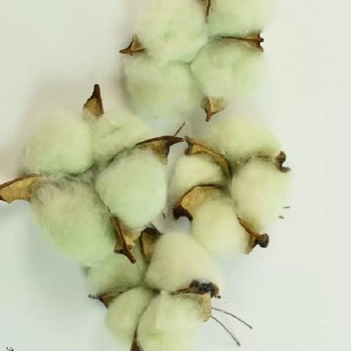 Bumbac capete verde pastel