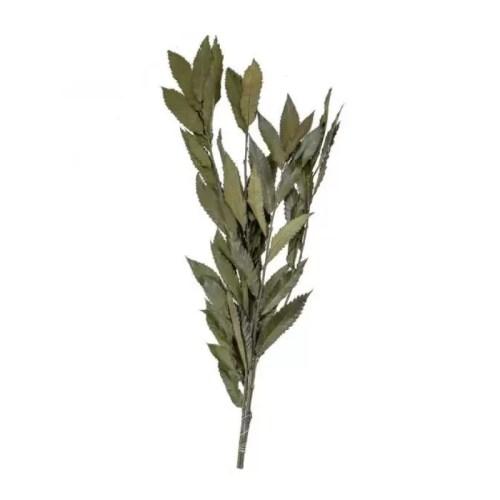 Castan conservat verde