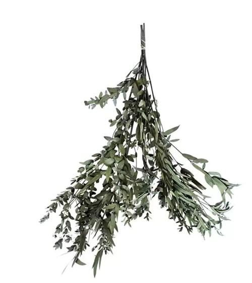 Eucalipt Parvifolia Artflora verde inchis 1