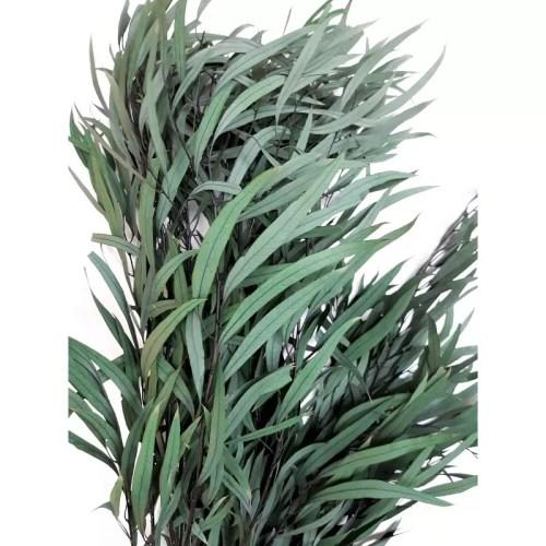 Eucalipt conservat Nicoly verde