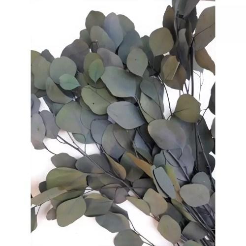 Eucalipt conservat banut verde gri