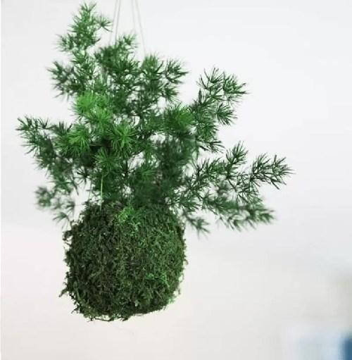 Feriga Ming verde Kokedama