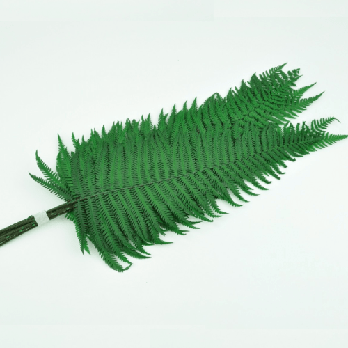 Feriga Parch. verde