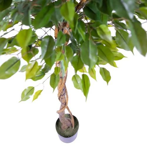 Ficus artificial c165 cm 1
