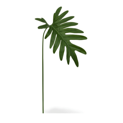 Frunza philodendron H55