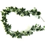 Ghirlanda iedera variegata verde alb