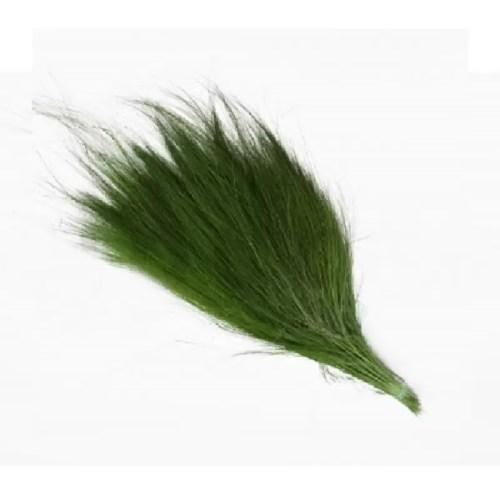 Iarba Barba conservata verde iarba 01