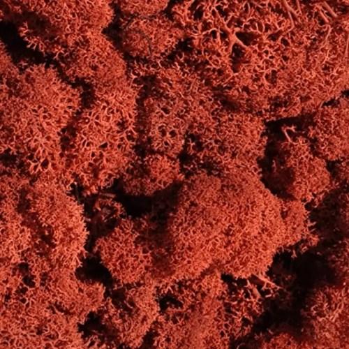 Licheni Brick Caramiziu 500gr