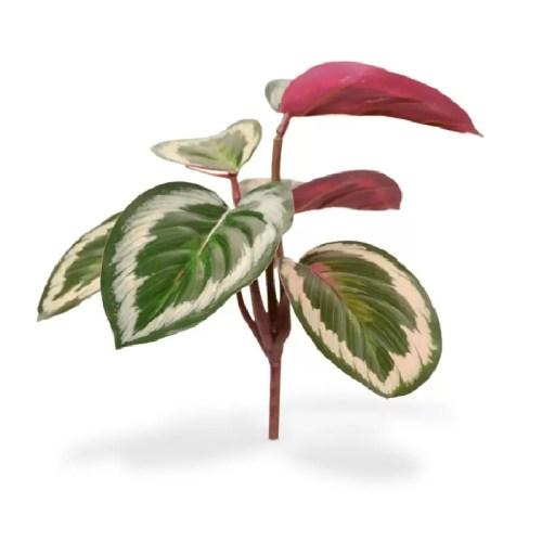 Mini Calathea