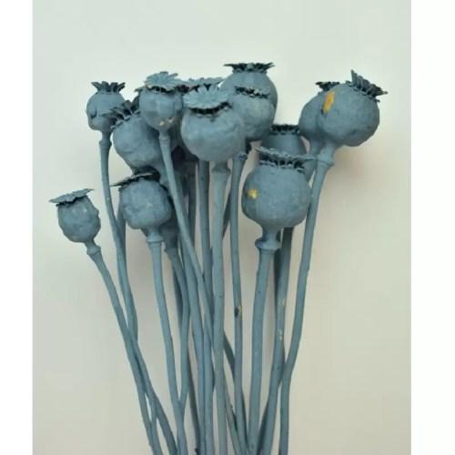 PU Mac mini Albastru pastel set