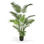 Palmier Areca 150cm